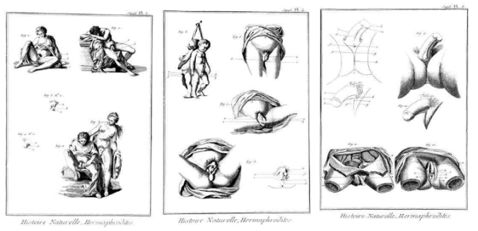Illustrations for the entry 'Hermaphrodite' in the Encyclopaedia by Diderot and D'Alembert (1765). The Encyclopaedia was well-known in Russia, translated into Russian at the time and widely used in teaching.